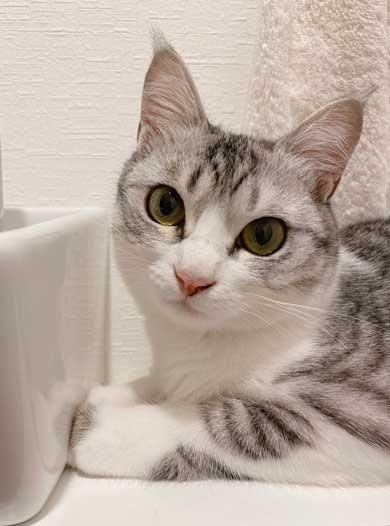 リュック わくわく 顔 猫 病院 もちもちタイプ