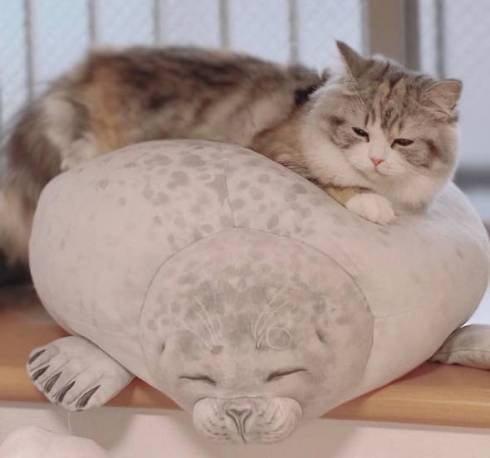 猫 スコティッシュフォールド ねむ ねむろぐ