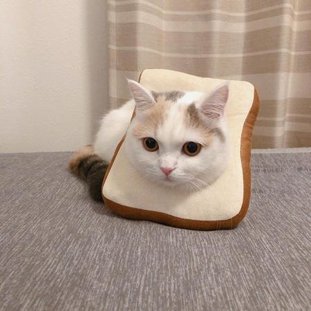 しらすちゃんパン