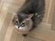 「愛してくれた方々ありがとうございました」 中島美嘉、愛猫・ケダマが天国に 美しいブーケで安らかな「旅立ち」を祈願
