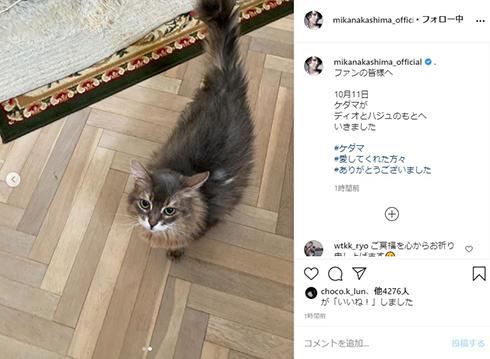 中島美嘉 ケダマ 愛猫