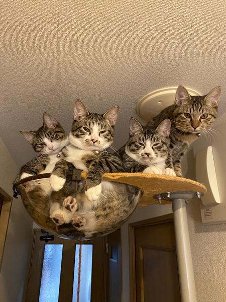 マシマシ猫ちゃんアップ