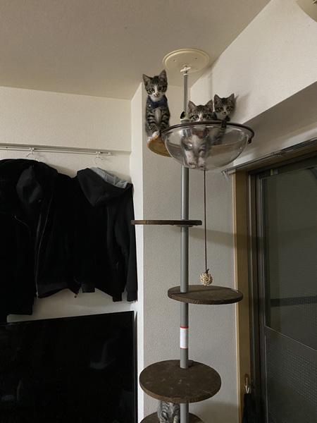 ボウルに3匹の猫ちゃん