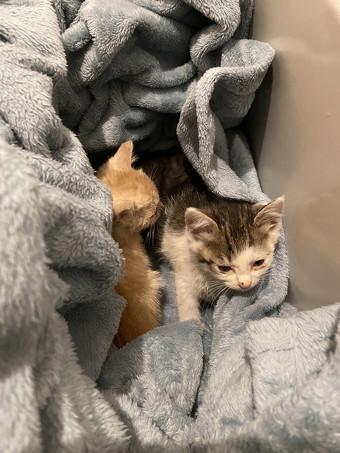毛布にくるまれた子猫ちゃん3匹2枚目