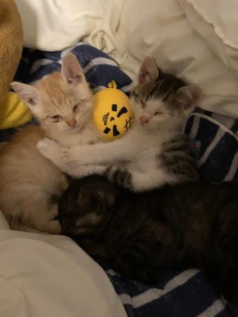 くっついて眠る子猫ちゃん3匹