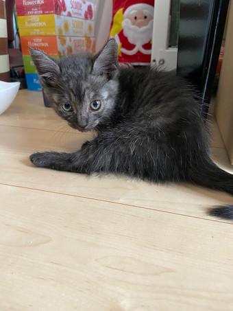 黒っぽい猫ちゃん