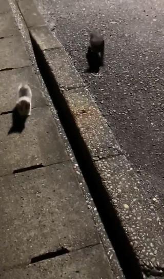 駆け寄ってくる子猫ちゃん2匹少しアップ