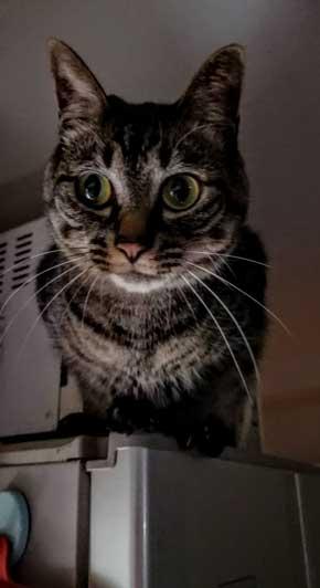 テレビ前 自宅 ホラーを観ない理由 猫 なごませてくる