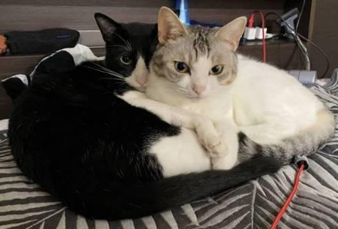 猫 とうふちゃん 大豆姉妹