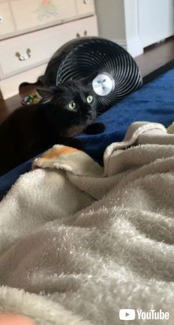 黒猫と茶トラ猫