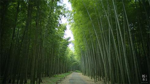 若竹の杜 若山農場