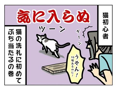 猫飼い初心者への洗礼3