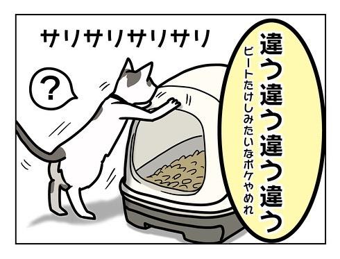 猫飼い初心者への洗礼7