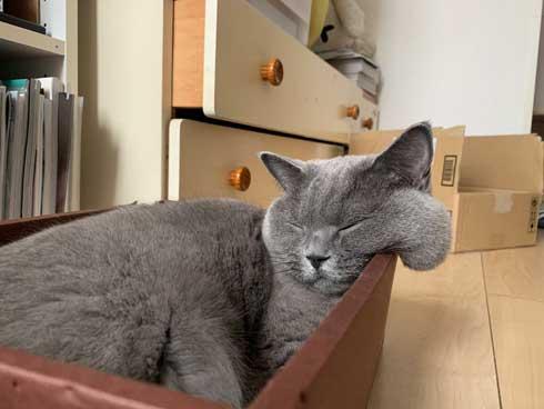 ほっぺ こぼれおちそう 猫 あふれる プニプニ かわいい 寝顔
