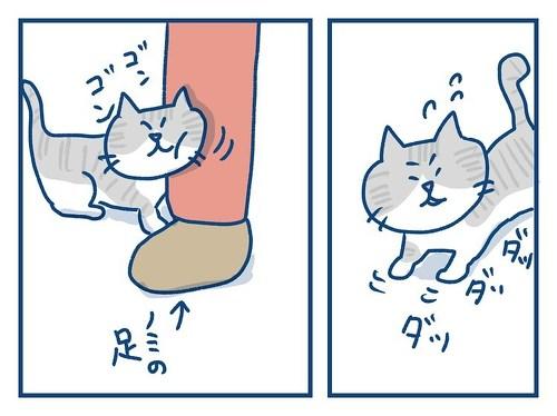 「思っていたのとちがう! 猫の芸の話」「思っていたのとちがう! 猫の芸の話」