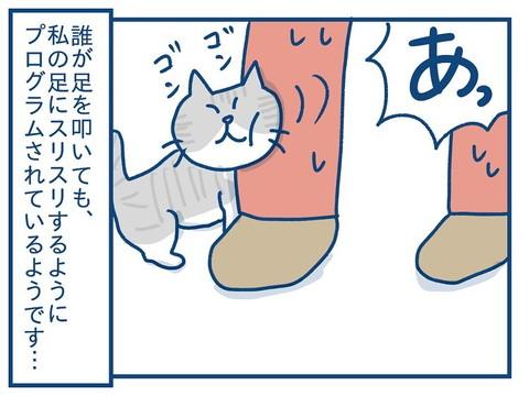 「思っていたのとちがう! 猫の芸の話」