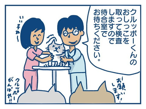 「猫のきょうだい愛の話」