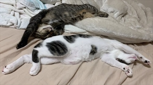 「挟むのヤメロ」な猫ちゃん