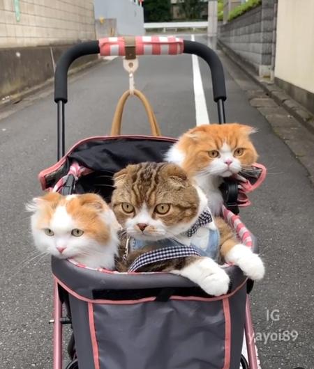 カートに乗る3匹