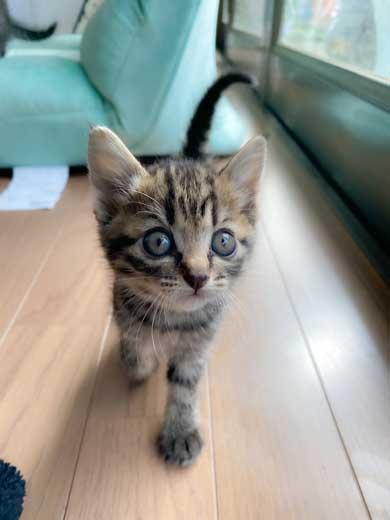 里芋 畑 夫 旦那さん 子猫 抱きかかえて 帰ってきた 捨て猫