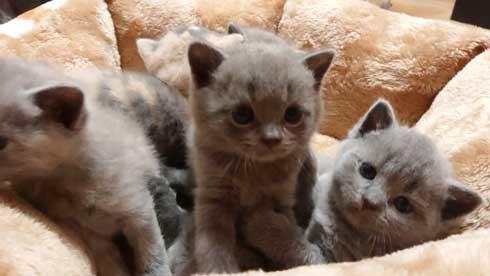 荒ぶる子どもたち 疲れはてる父 パパ 子育て 猫 家族 子猫 赤ちゃん