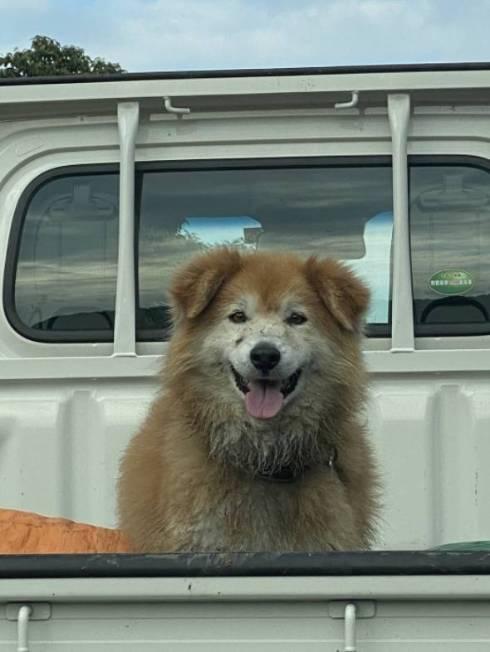 犬 チャコちゃん 田んぼ 泥遊び