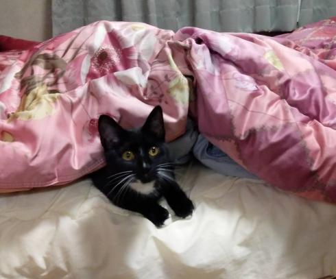 足風邪タカヤさん