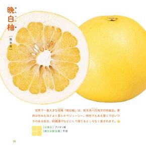 柑橘系断面図