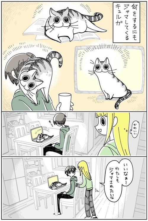 ジャマしたいネコ