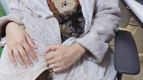 「ママを暖房だと思って集まってくる猫たち」