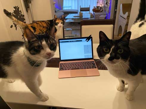 猫がゴロゴロよろこぶCDブック 猫専用 ヒーリングミュージック ネコ研究 響介