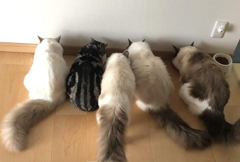 店内のネコちゃんたち