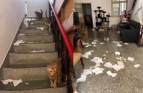 店 天井 猫用 改造 監視 猫 裏側 お腹