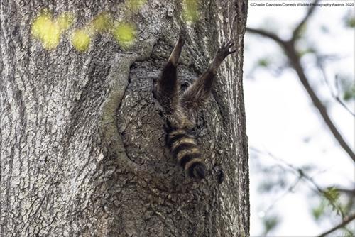 野生動物写真コンテストの結果