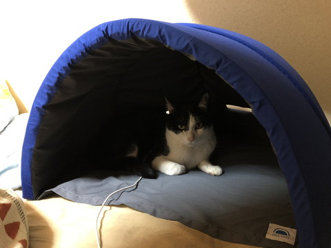 快眠ドームにネコちゃん