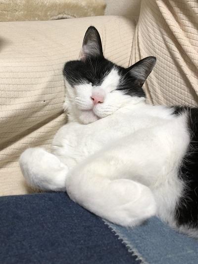 藤井さんのネコちゃん