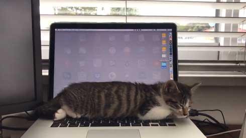 猫の呼吸 画面 切り替わる PC パソコン お昼寝 スリープ