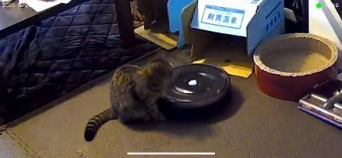 猫 ルンバ ジルちゃん