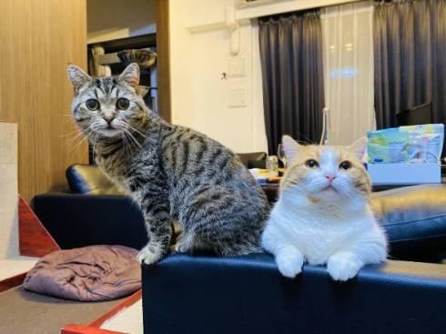 猫 ルンバ ジルちゃん ティモ君