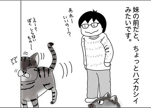 肩のり猫4