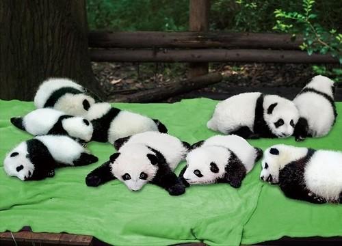 パンダのボックスティッシュカバー