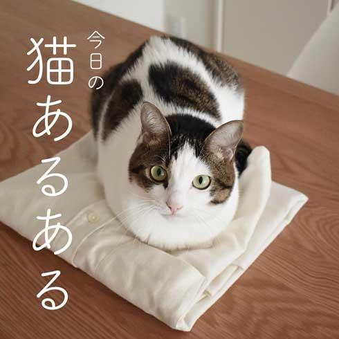 今日の猫あるある 多頭飼い 猫 服 毛だらけ ヒヒさんとよつこ