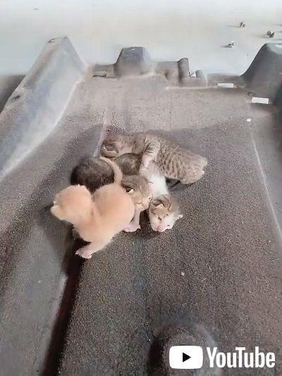 車の内部に侵入した子猫
