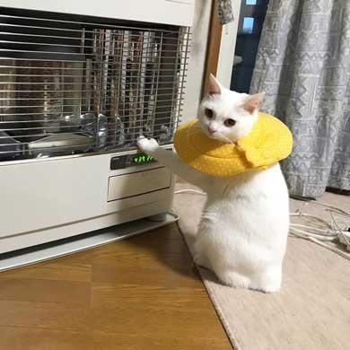 2020年 ストーブ つけてほしい リリー 猫 要求