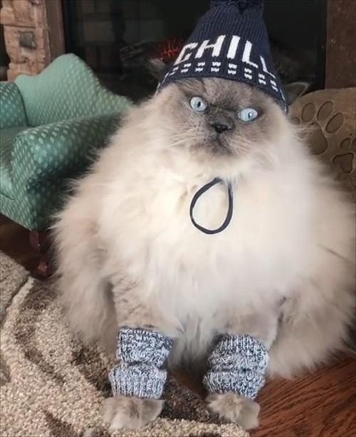 モフモフな猫ちゃん