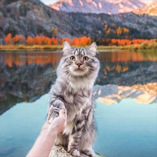 紅葉が似合う猫