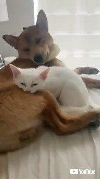子猫とワンコ