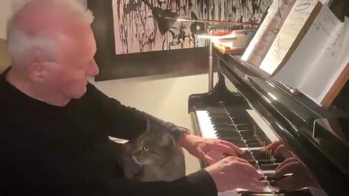 ホプキンスと猫