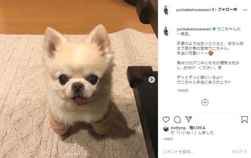 中村ゆり 犬 天ちゃん ウニちゃん ペット