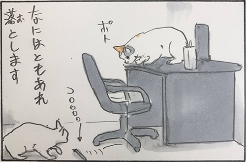 猫のお仕事6枚目